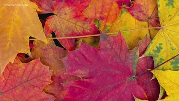SCIENCE BEHIND: The colors of the fall leaves