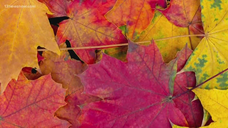 Fall colors are expected to peak this week. Here are 5 places to see the leaves in Hampton Roads.