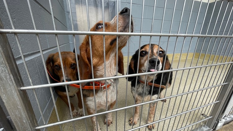 Hundreds of animals in Isle of Wight need a home after owner dies