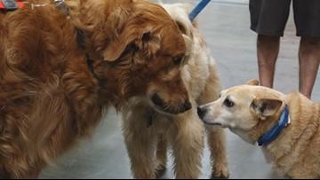 BENTLEY'S CORNER: Dog Harnesses