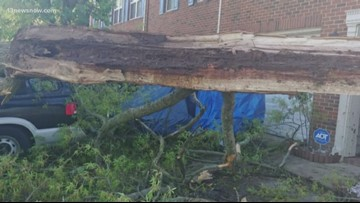 How to prepare trees for severe weather