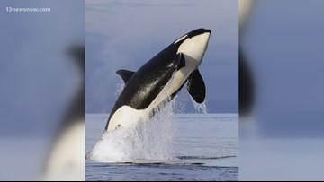 Chesapeake Bay Foundation fighting back against changes to endangered species act