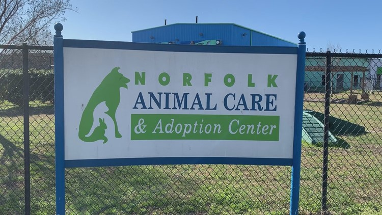 Norfolk Animal Care and Adoption Center adoption rate went up in 2020