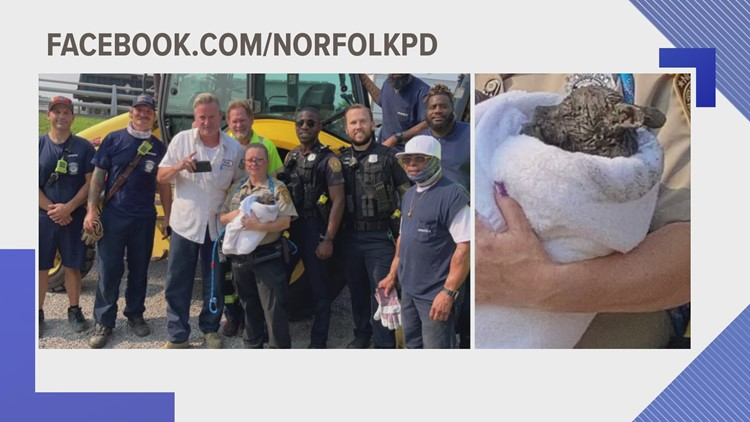 Puppy rescued from drain pipe in Norfolk