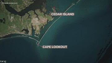 Cows carried away by Hurricane Dorian found alive in Outer Banks