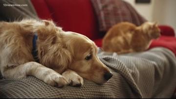 BENTLEY'S CORNER: Pet Allergies