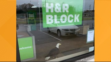 Bald eagle crashes through window of H&R Block office in Virginia Beach