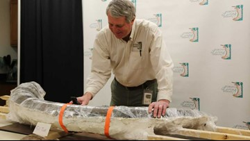 Virginia Living Museum's Mastodon bones collection named as Virginia's Top 10 Endangered Artifacts