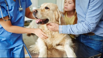 Bentley's Corner: Pets with diabetes