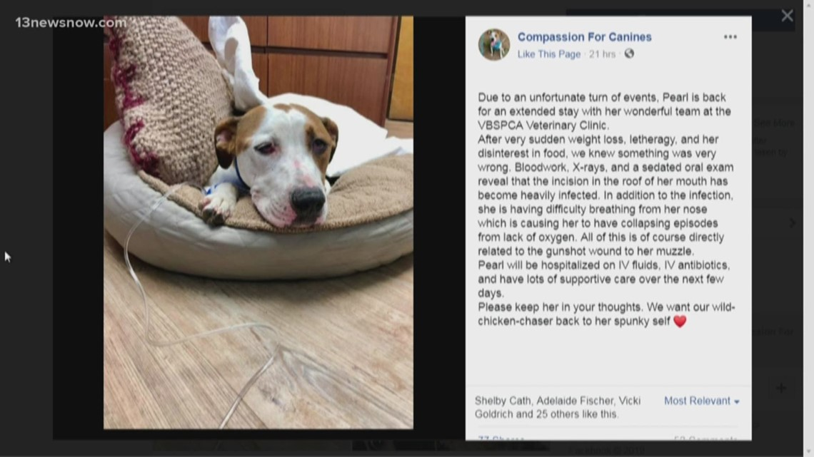 Virginia Beach dog shot in the face back at veterinary clinic