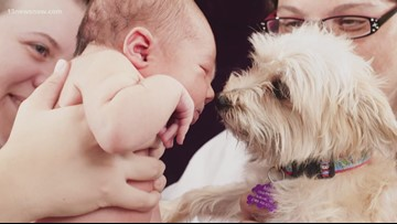 BENTLEY'S CORNER: Your dog and a new baby
