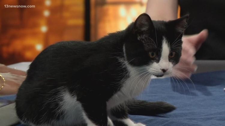 Shelter Sunday: Meet Merlin the kitten