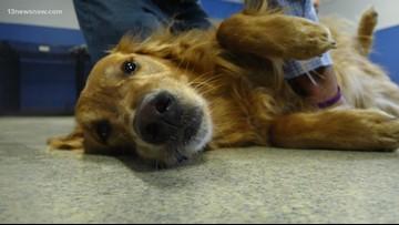 BENTLEY'S CORNER: Learn Pet CPR