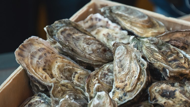 Saving the Bay: Eco-tourism duo 'Shored Up' on a mission to restore oysters, educate about Virginia's environment