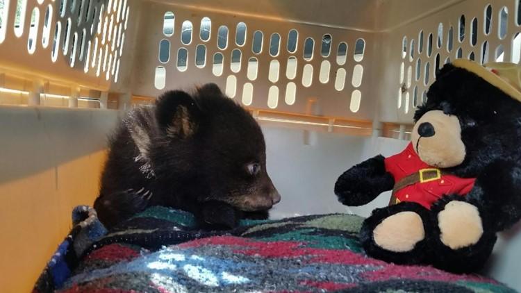 Bear cub #19-0546