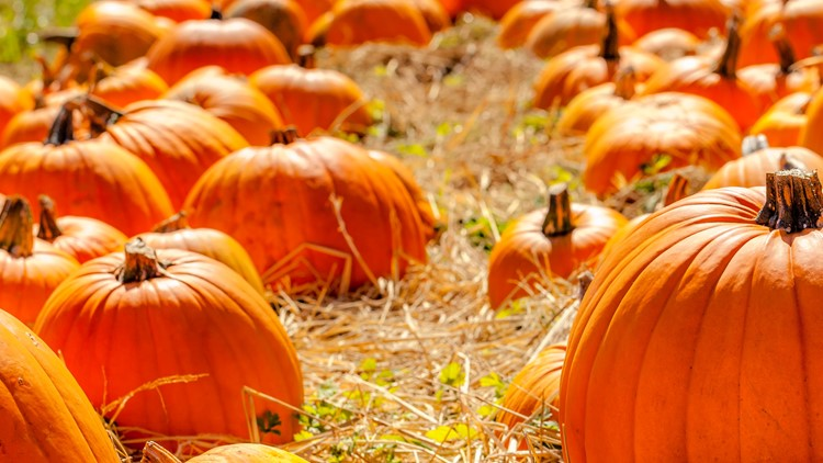 Hayrides, corn mazes and pumpkin patches: Hampton Roads fall adventure guide