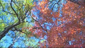 Tracking fall foliage in Hampton Roads