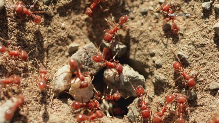 Fire ant quarantine extends to Hampton Roads