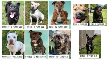 Foster a Portsmouth Humane Society pup this Easter weekend