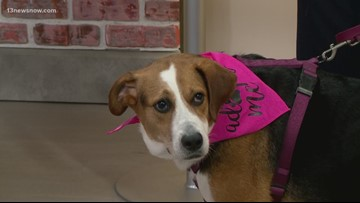 Shelter Sunday: Meet Olive! She's looking for her forever home.