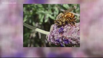 9th Annual Virginia Honey Bee Festival this weekend