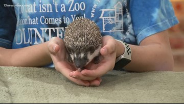 Shelter Sunday: These two baby hedgehogs are looking for a home!