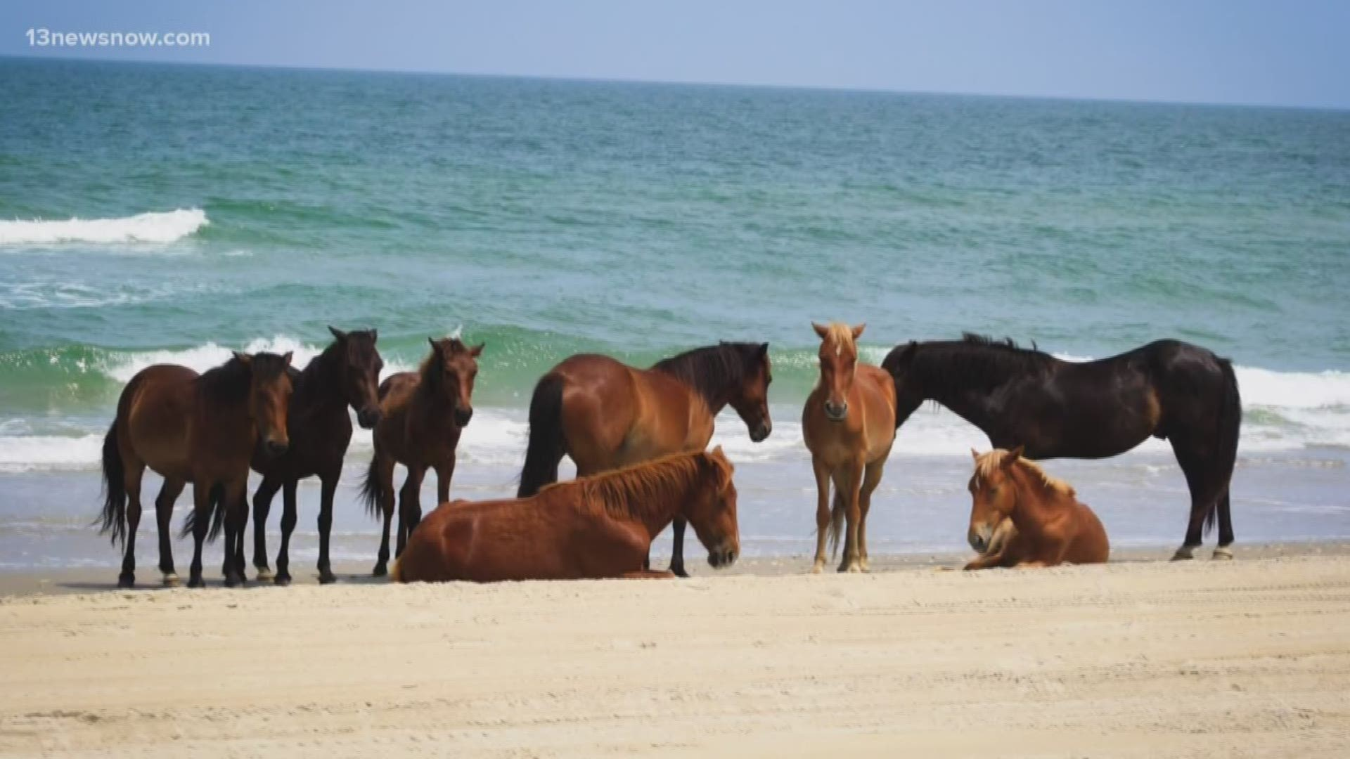 Do Not Do This Group Warns Visitors To Stay Away From Wild Horses On The Outer Banks 13newsnow Com