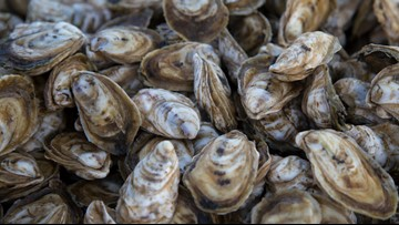 Tangier Island man sentenced to prison for illegally harvesting, selling oysters