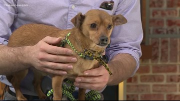 Shelter Sunday: Meet Havarti! This little guy is looking for his forever home.