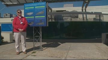 MAKING A MARK: Woman has volunteered at Virginia Aquarium more than 3 decades