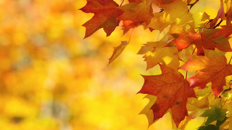 Fall 2021 is here. Here's when you'll likely see the fall colors in Hampton Roads.