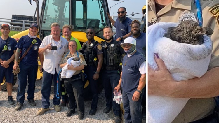 City of Norfolk workers rescue puppy stuck in drain pipe