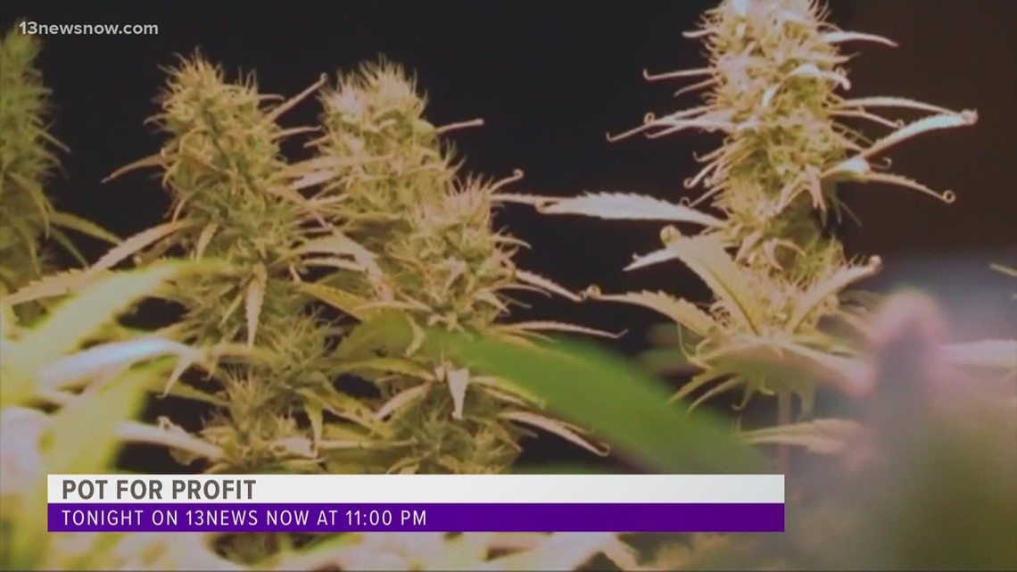 POT FOR PROFIT Tease: Navy vet turns to marijuana for medical condition