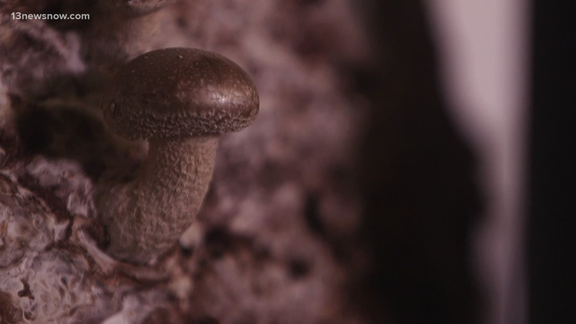 Shroom Boom: Magic Mushrooms, psychedelics see new medical treatment potential