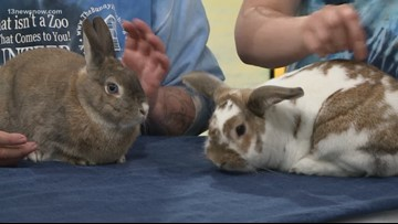 Shelter Sunday: Bunnies Bonnie and Clyde need a forever home