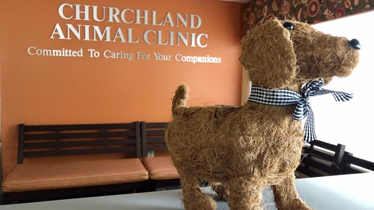 Animal clinics in Hampton Roads overwhelmed from influx of new patients