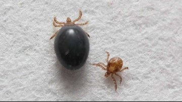A bad tick year? Every year is a bad one, experts say