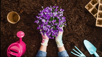 Gardeners needed to adopt a flower bed in Suffolk