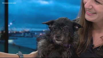 Shelter Sunday: Meet Mia! She's looking for a family to adopt her.