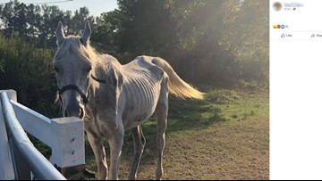 Officials: Suffolk horse pictured on social media has been euthanized