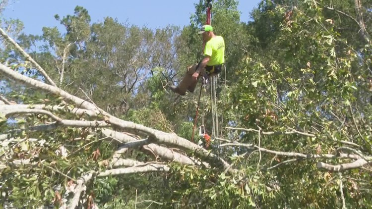 Tree removal crew answers Louisiana woman's plea for help after news highlight