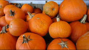 How do you pick the perfect pumpkin? There are plenty of options here in Hampton Roads
